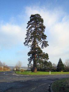 Holy Tree, Stoke-Sub-Hamdon, Somerset